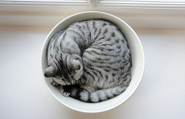 cat-in-bowl