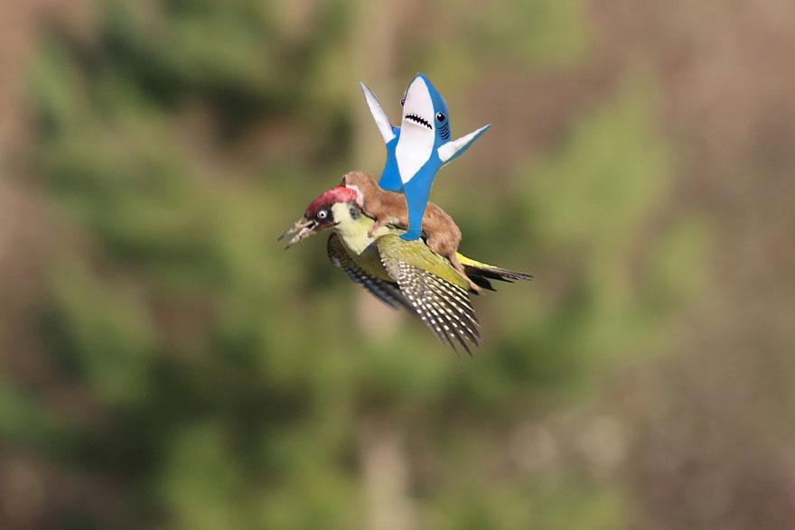 leftshark-riding-weasel-riding-woodpecker-wildlife