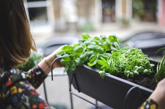 so bepflanzt ihr euren balkon in wenigen schritten mit vergn gen berlin. Black Bedroom Furniture Sets. Home Design Ideas
