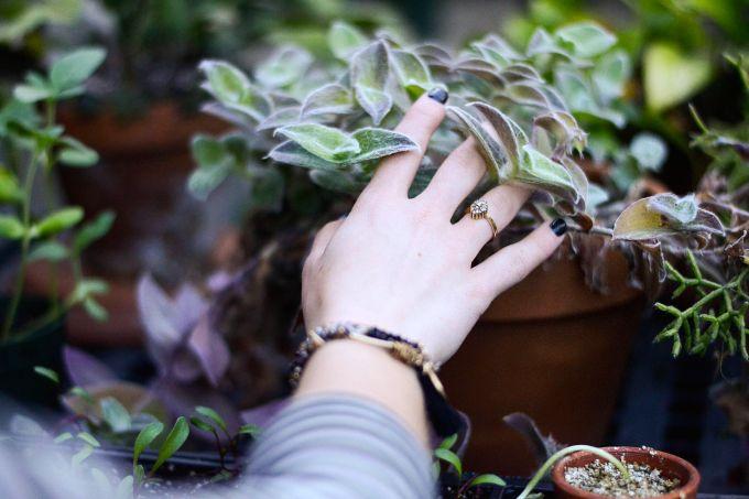 Heimische Pflanzen für mehr heimische pflanzen auf dem balkon mit vergnü berlin