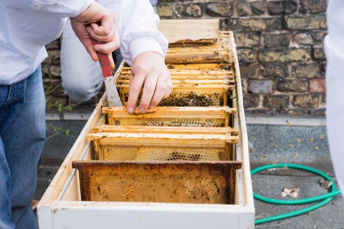 den bienen ein zuhause geben ein besuch beim imkerkurs der stadtbienen mit vergn gen berlin. Black Bedroom Furniture Sets. Home Design Ideas