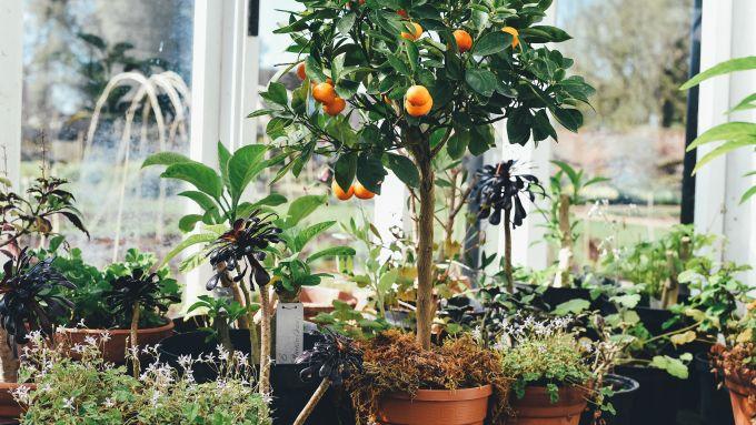 11 l den in denen ihr tolle pflanzen kaufen k nnt mit vergn gen berlin. Black Bedroom Furniture Sets. Home Design Ideas