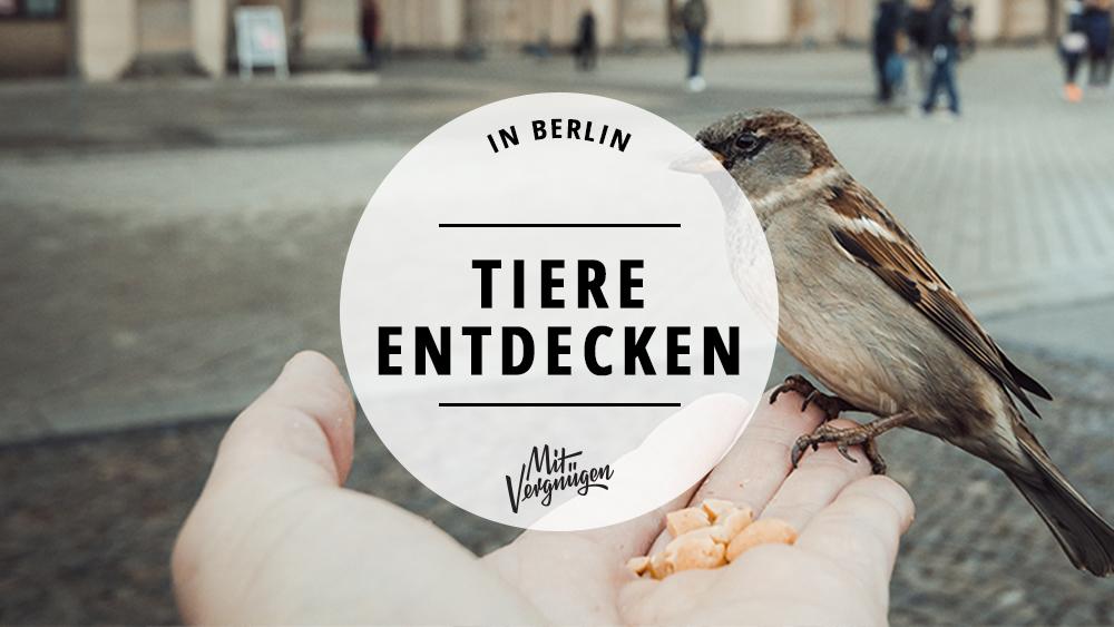 11 Orte in Berlin, an denen ihr Tiere entdecken könnt
