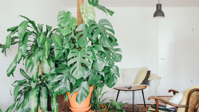 11 tipps f r einen sch nen sonntag in treptow mit vergn gen berlin. Black Bedroom Furniture Sets. Home Design Ideas