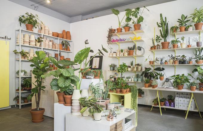 im h bschen the botanical room k nnt ihr besondere pflanzen kaufen mit vergn gen berlin. Black Bedroom Furniture Sets. Home Design Ideas
