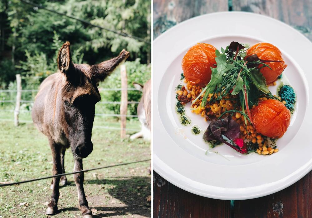Esel und vegane Küche in der Boltenmühle in Neuruppin am Tornowsee