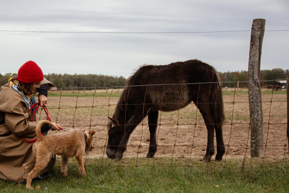 Fohlen auf Weide und Hund