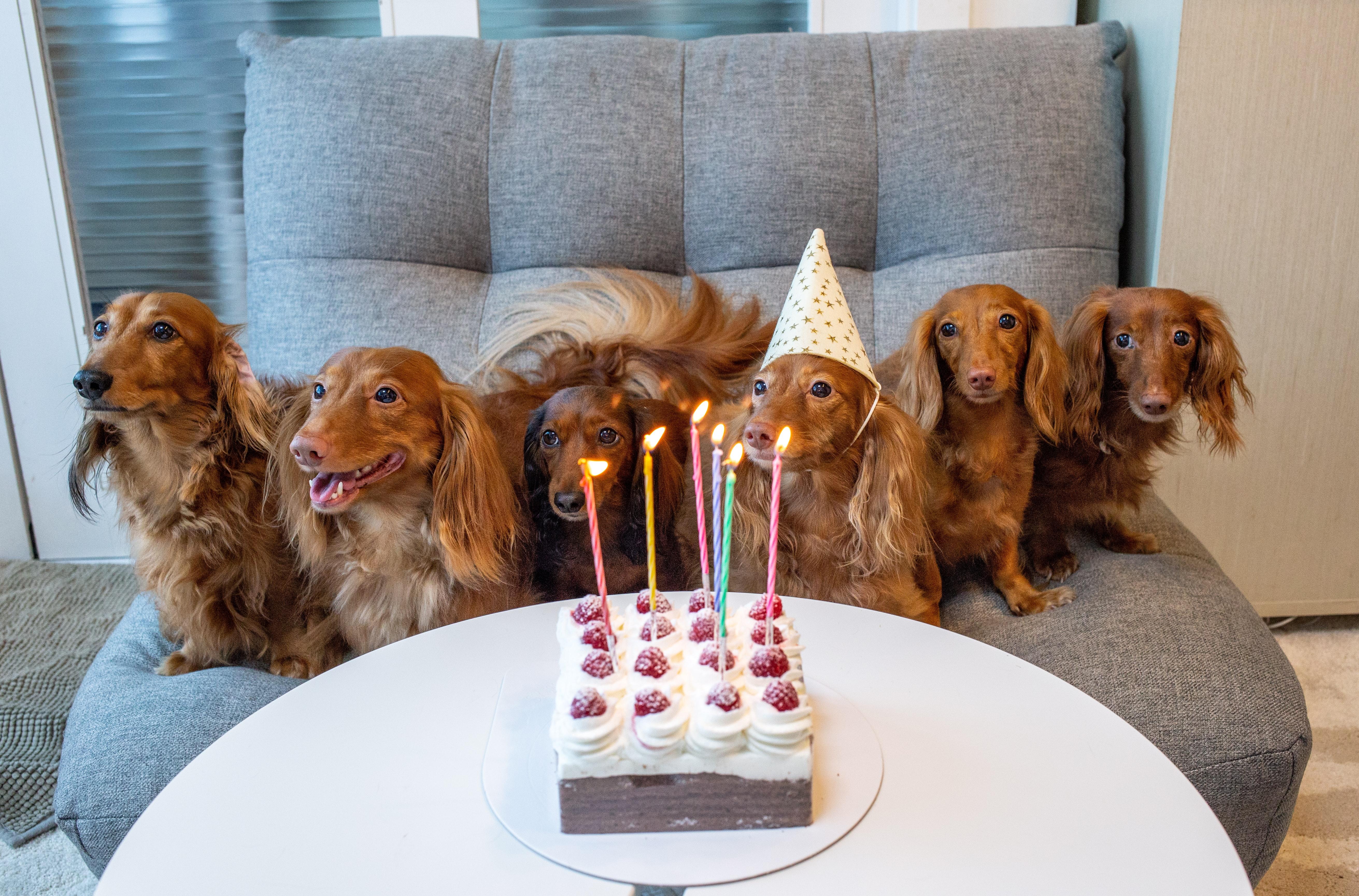 Geburtstag Verpasst