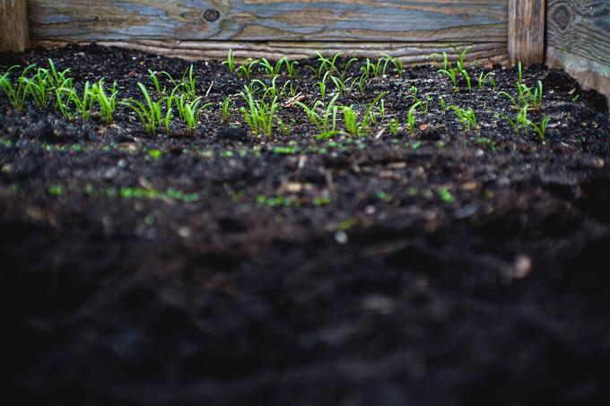 Feld Acker Bauer auf dem Land Gemüse