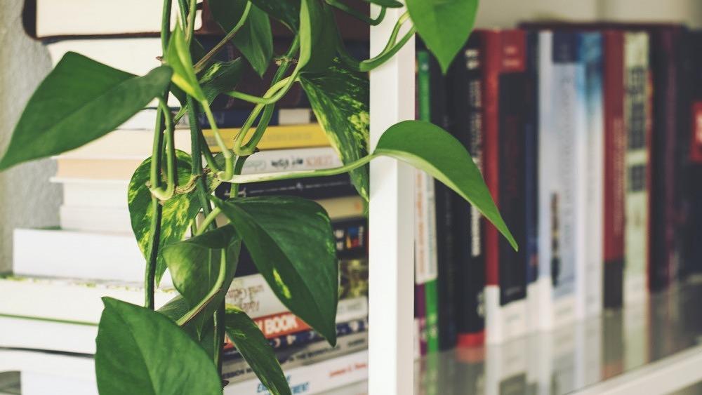 11 Bücher, die ihr 2021 lesen solltet