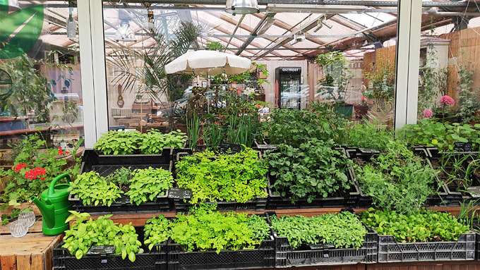 Britzer Garten, Gartencafé, Kräuterbeet